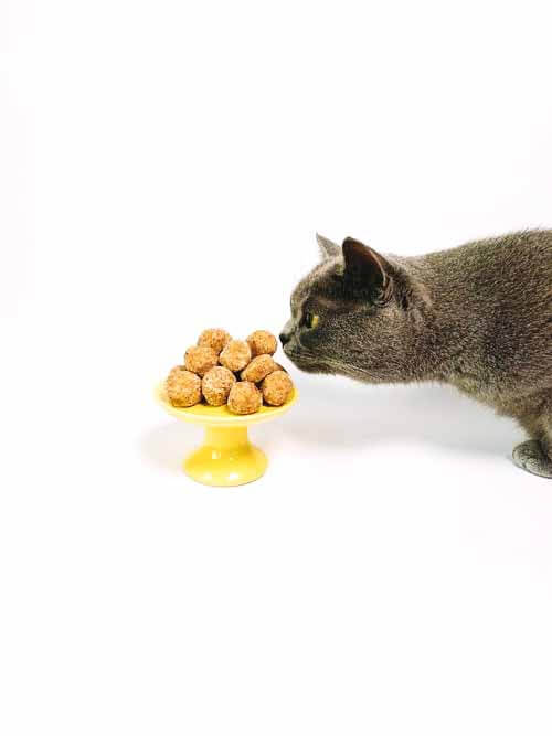 How to choosing a good cat food