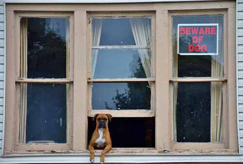 Dealing with neighbors' pets