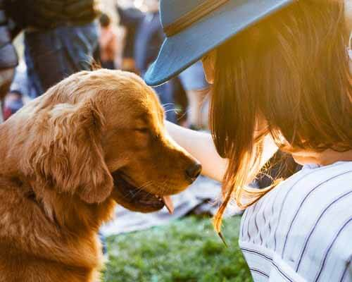Can a pet really make you feel good