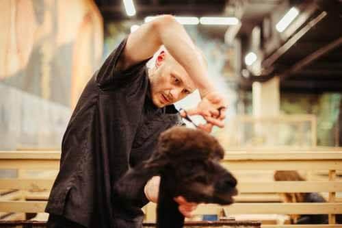 5 Tricks to groom your dog