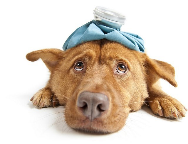 Infection from ticks and fleas