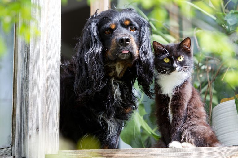 Toxic things for dogs and cats