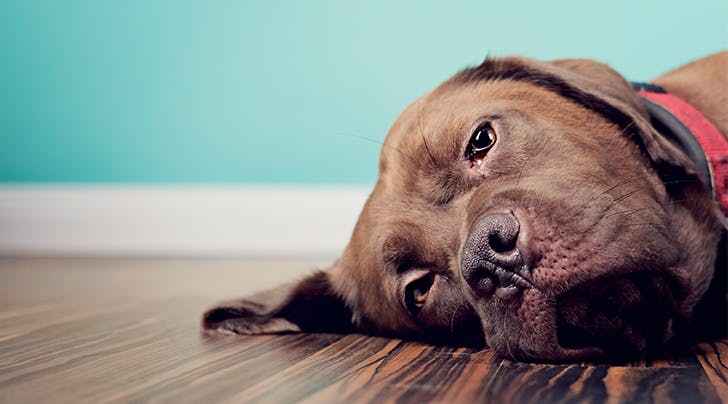 Signs of depression in dogs